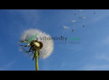 Tarassaco: benefici per depurare l'organismo
