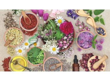 Come curare l'ansia naturalmente: 6 piante per la tua calma